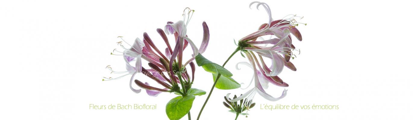 Les fleurs de Bach