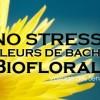 Fleur de Bach contre le stress