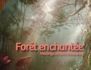Forêt enchantée, mélange de thés envoutant