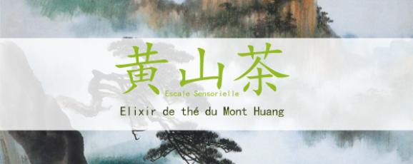 Thé vert grande origine Mont Huang