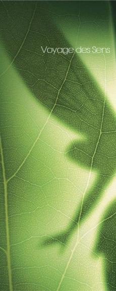 forêt-enchantée-escalesensorielle-1