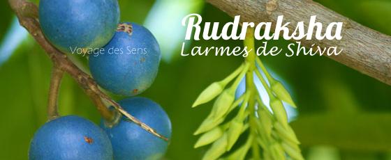 Rudraksha fruit Escale Sensorielle
